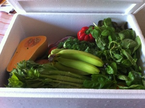 Family box of organic and sustainable fresh fruits and vegetables